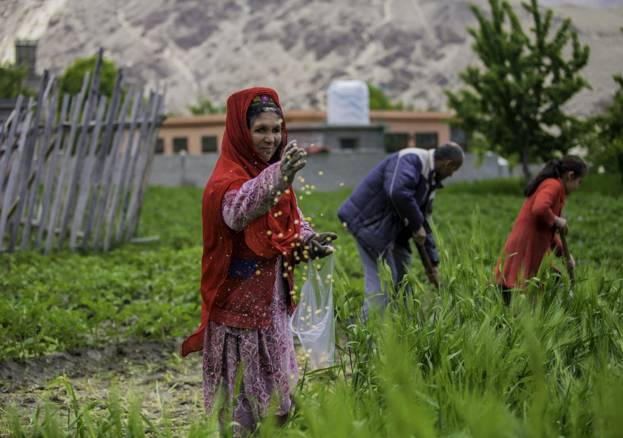 Over the years, the Aga Khan Rural Support Programme has helped tens of thousands of farmers in the Gilgit-Baltistan, Pakistan, by introducing good quality seeds and facilitating the production of local fertilizers that are less expensive and raise crop yields.