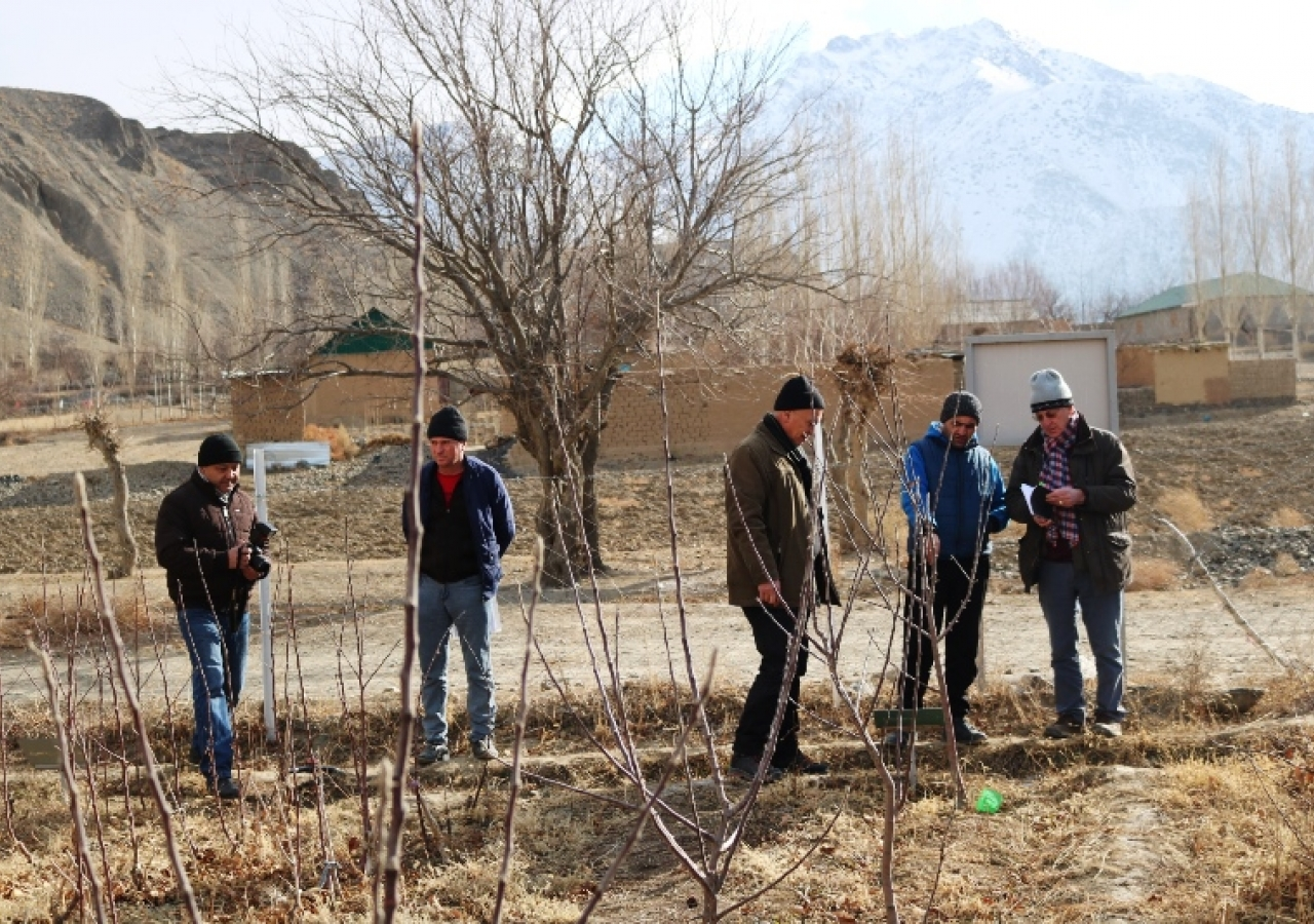 Fruit tree nursery group (Shiraz with farmer and experts) in Pokhut village, Ayni district.