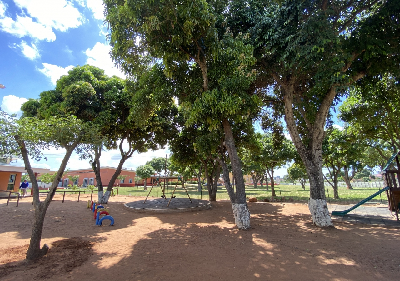 Flora - Mango Trees