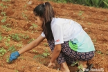 Aga Khan Academy Hyderabad students planned and implemented an organic farm on school grounds during the pandemic.