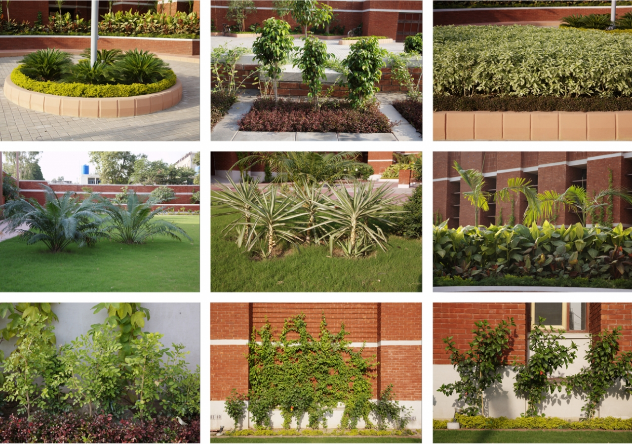 A variety of indigenous shrubs and plants can be found in the gardens and courtyards of the Lahore Jamatkhana complex.