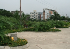 A view of the shrubs and plants at the entrance opposite the main building facade.