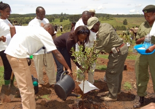 """Through """"Planting a Tree for Africa"""", the Serena Hotels Group has planted over one million trees in the National Parks of Kenya."""