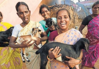 Meet the 'pashu sakhis' of rural Bihar