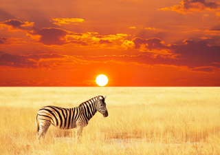As the home of some of the world's most endangered species, it is essential to protect Africa's wildlife from further decline.