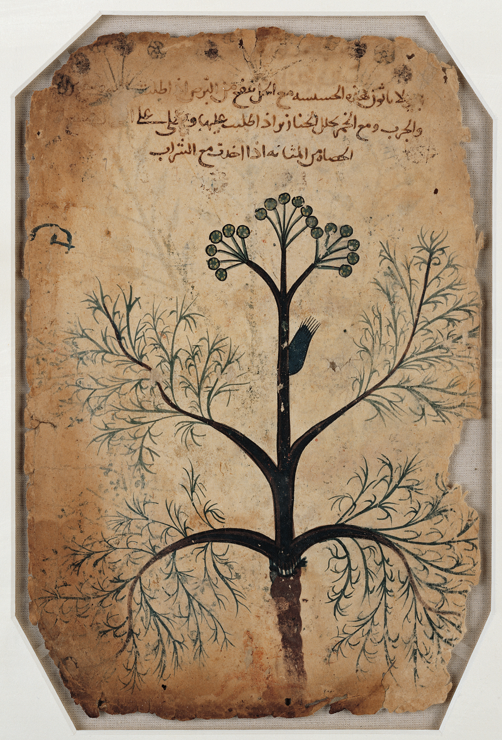 Folio from De Materia Medica (Iraq, circa 1200). First translated into Syriac and then into Arabic, the work became a widely used manuscript for Islamic studies of pharmacology. Photo: Courtesy of the Aga Khan Trust for Culture