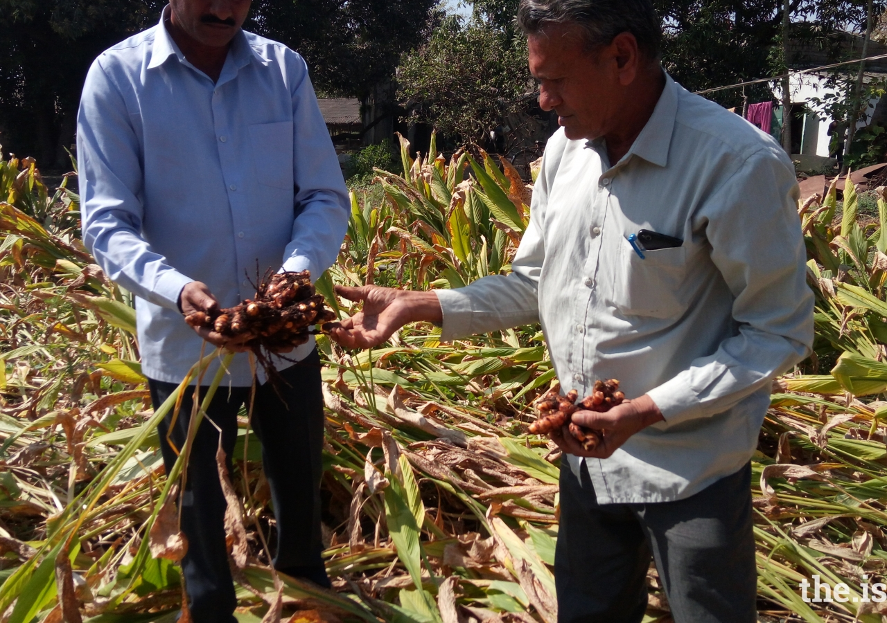 Farmers from Sangodra showing off their turmeric crop which was grown under the guidance of the United Farmers Alliance and the Junagadh Agriculture University