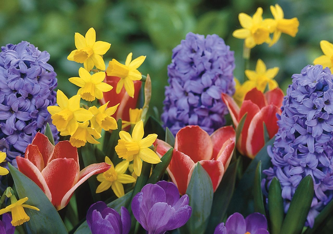The first day of spring signifies a time of spiritual renewal and physical rejuvenation.