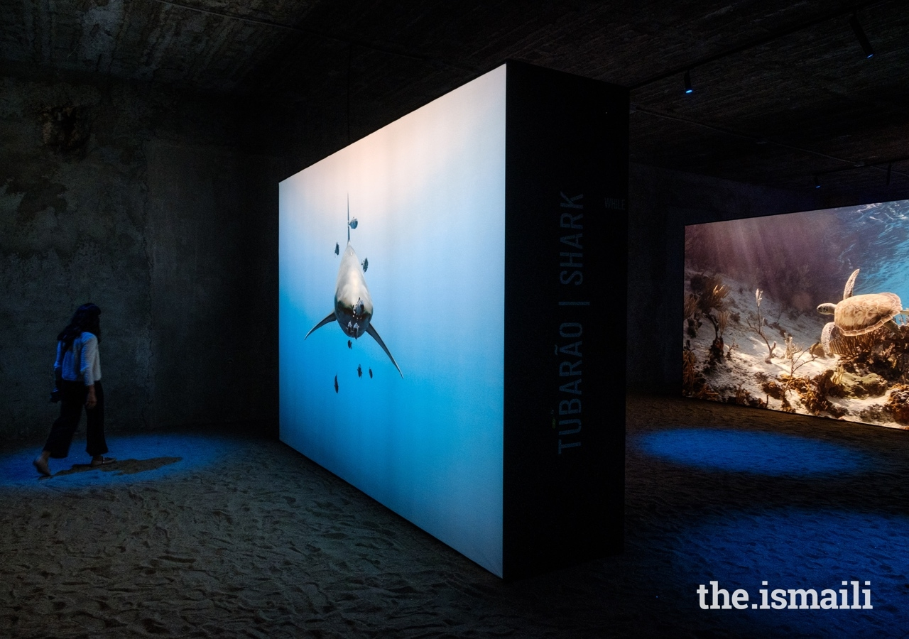 The Living Sea exhibition features over 100 photos depicting the beauty, fragility, and diversity of marine life.