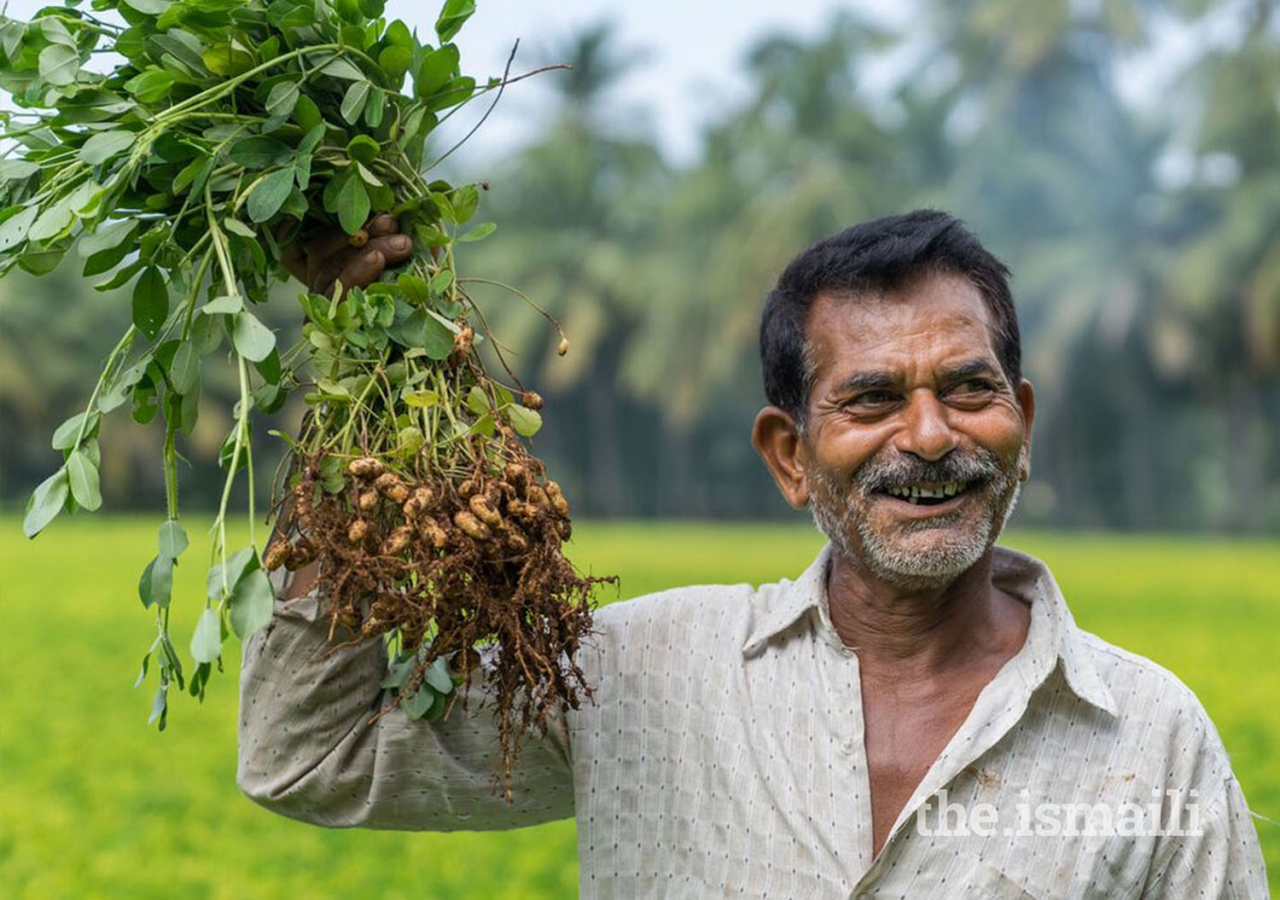 Food security, income enhancement, and sustainability are main objectives of the Programme's agriculture interventions, reaching over 100,000 farmers.