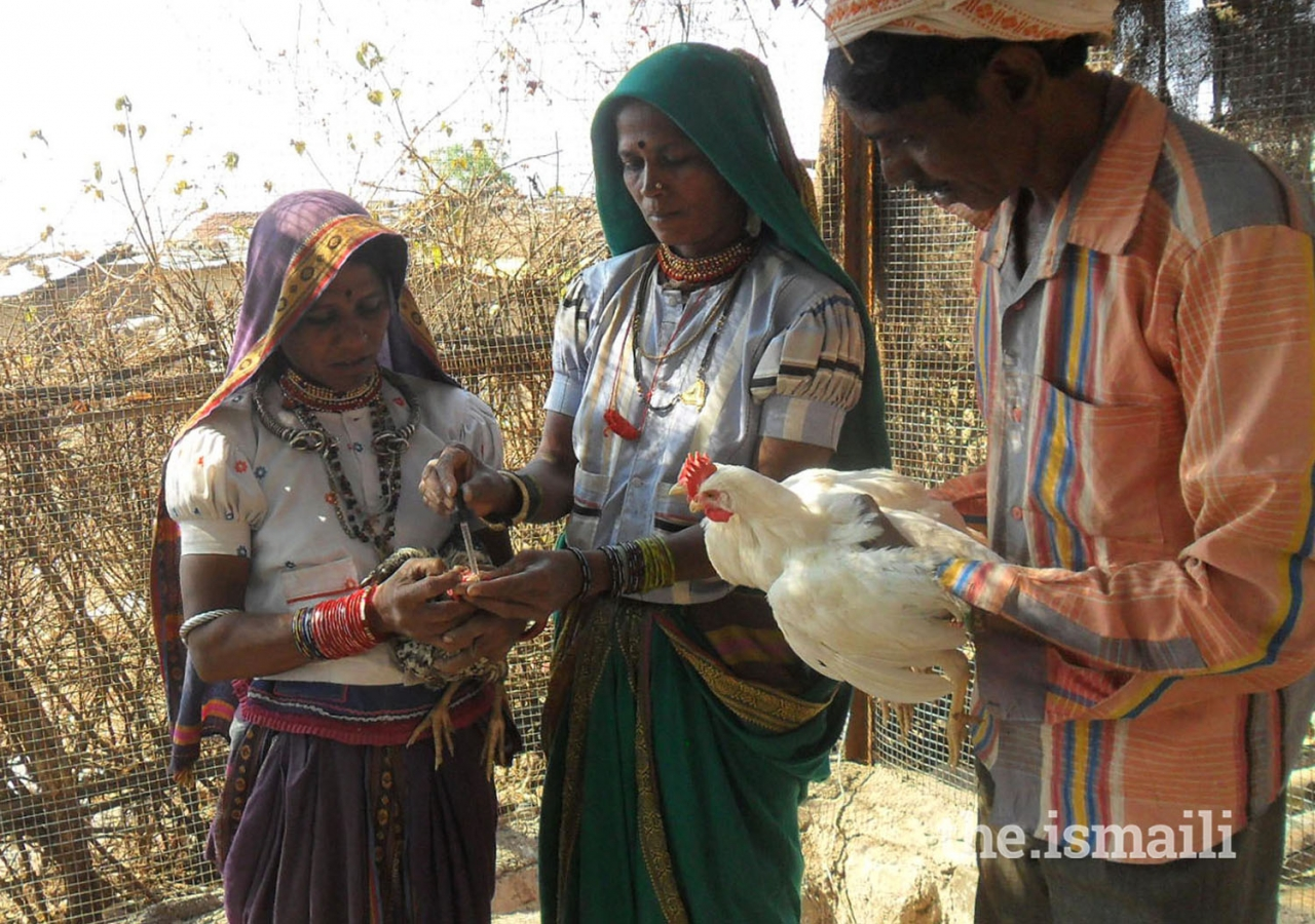 The livestock development program includes dairy, goat rearing, and poultry.