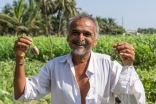 A vegetable farmer in India trained to replace harmful pesticides with organic farming, by the Aga Khan Rural Support Programme, India