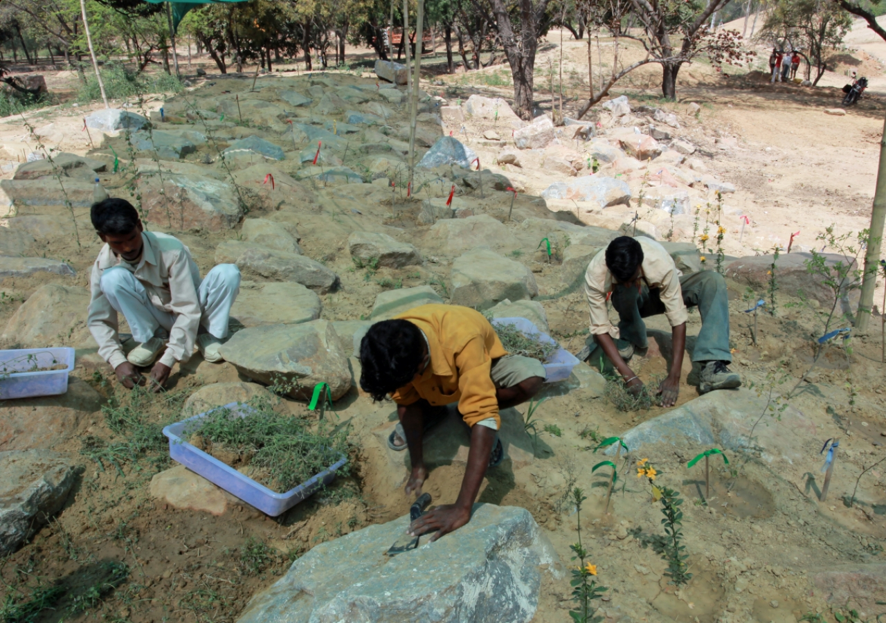 Workers plant on the micro-habitat mounds in Sunder Nursery in March 2010.