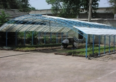 June 2006: Plants to be used in the landscaping and gardens of the Ismaili Centre, Dushanbe are grown and cared for in a dedicated nursery.