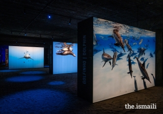 The Living Sea exhibition featured photographs of marine life including dolphins, sea lions, sharks, whales, turtles, and other creatures.